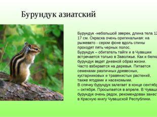 Бурундук азиатский Бурундук -небольшой зверек, длина тела 12-17 см. Окраска о