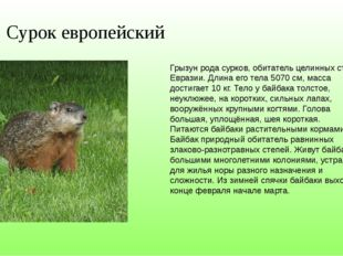 Сурок европейский Грызун рода сурков, обитатель целинных степей Евразии. Длин