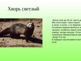 Хворь светлый Длина тела до 48 см, хвоста до 16 см. Мех блестящий, черно-буры