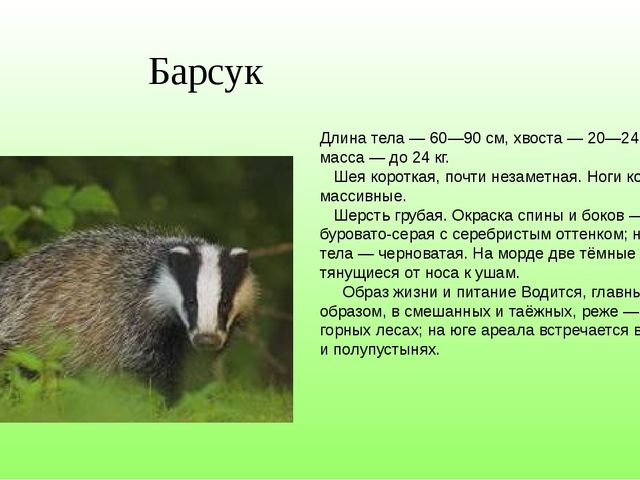 Длина тела— 60—90см, хвоста— 20—24см; масса— до 24кг. Шея короткая, по...