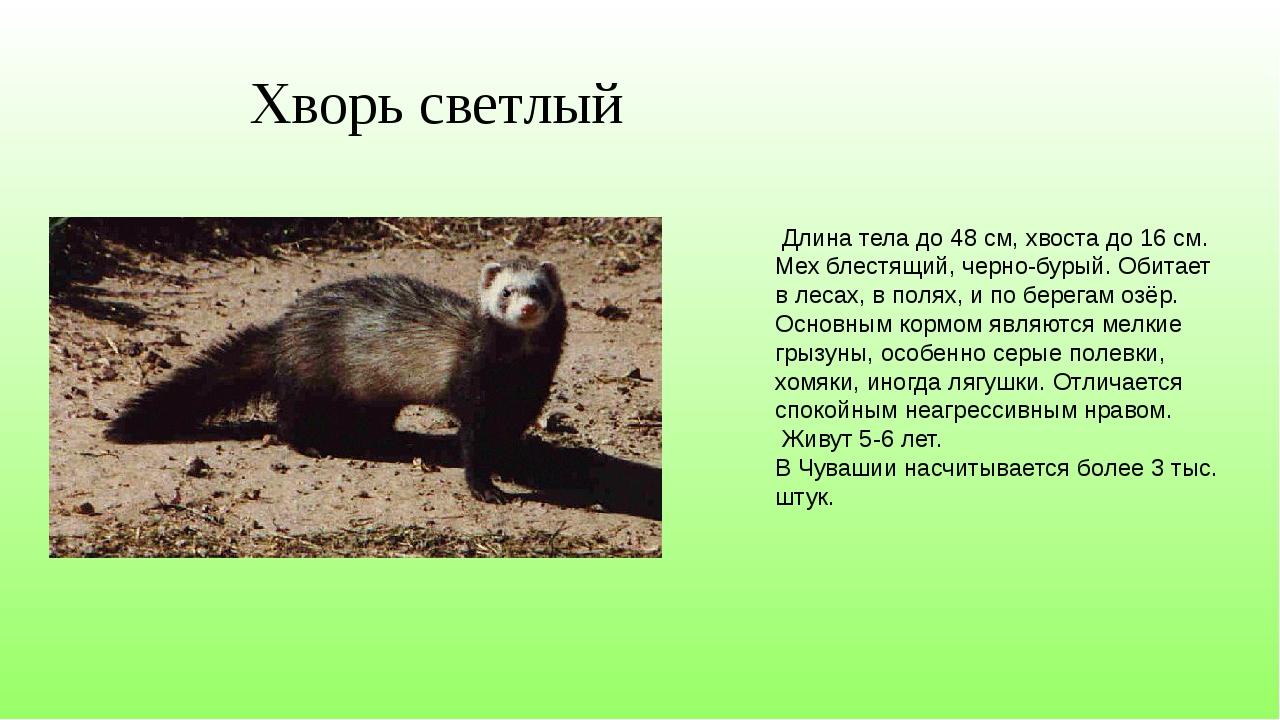 Хворь светлый Длина тела до 48 см, хвоста до 16 см. Мех блестящий, черно-буры...