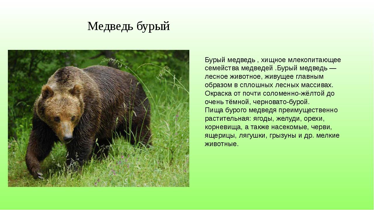 Фото и описание животного россии более привычного