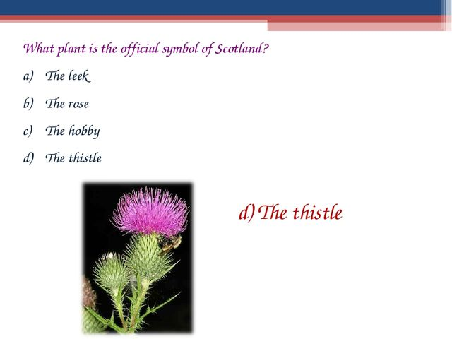 What plant is the official symbol of Scotland? The leek The rose The hobby Th...