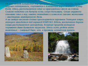 На юго-западе алтайских гор проходит долинареки Катунь. Катунь, широко изогн