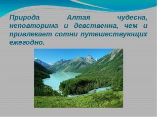 Природа Алтая чудесна, неповторима и девственна, чем и привлекает сотни путеш