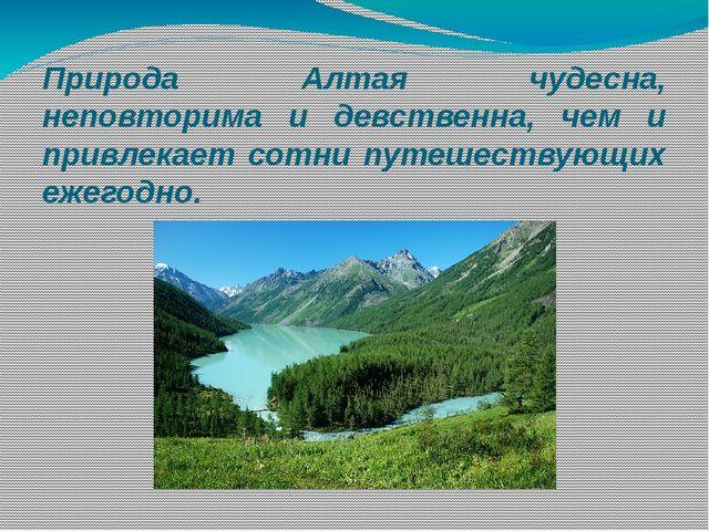 Природа Алтая чудесна, неповторима и девственна, чем и привлекает сотни путеш...
