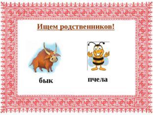 Ищем родственников! пчела бык