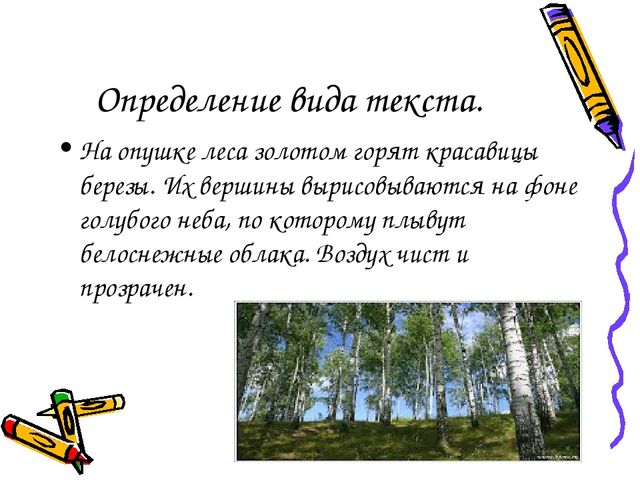 Определение вида текста. На опушке леса золотом горят красавицы березы. Их ве...