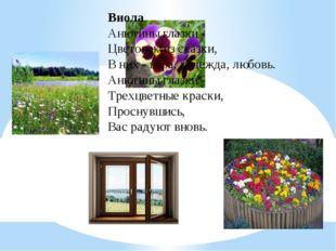 Виола Анютины глазки - Цветочек из сказки, В них - вера, надежда, любовь. Аню