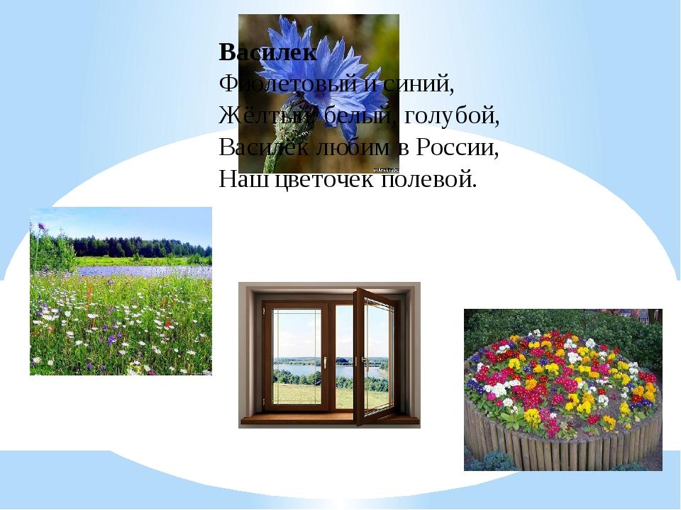 Василек Фиолетовый и синий, Жёлтый, белый, голубой, Василёк любим в России, Н...