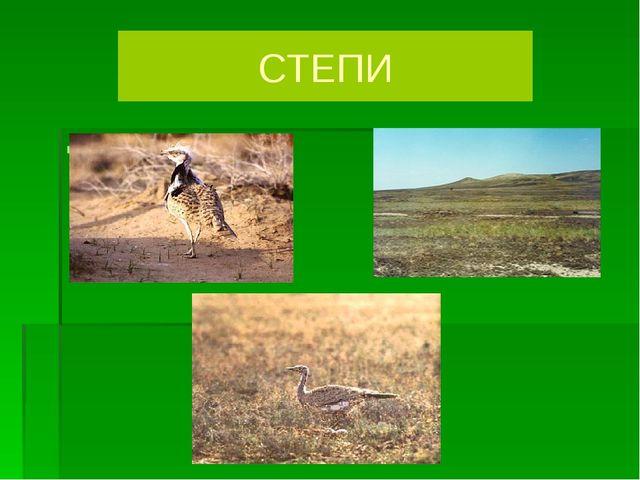 ДРОФА СТЕПИ