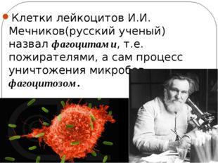 Клетки лейкоцитов И.И. Мечников(русский ученый) назвал фагоцитами, т.е. пожир