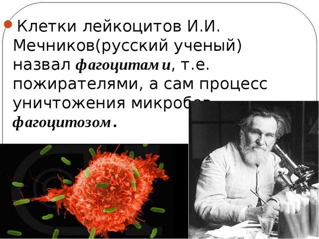 Клетки лейкоцитов И.И. Мечников(русский ученый) назвал фагоцитами, т.е. пожир...