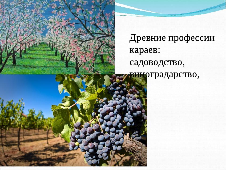 Древние профессии караев: садоводство, виноградарство,
