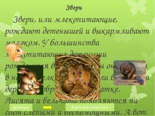 Звери Звери, или млекопитающие, рождают детенышей и выкармливают молоком. У б