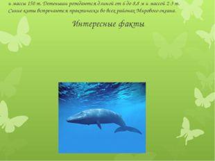 Интересные факты Синий кит - самое крупное животное планеты. Может достигать