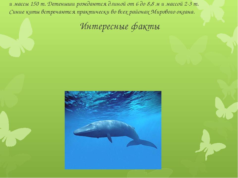 Интересные факты Синий кит - самое крупное животное планеты. Может достигать...