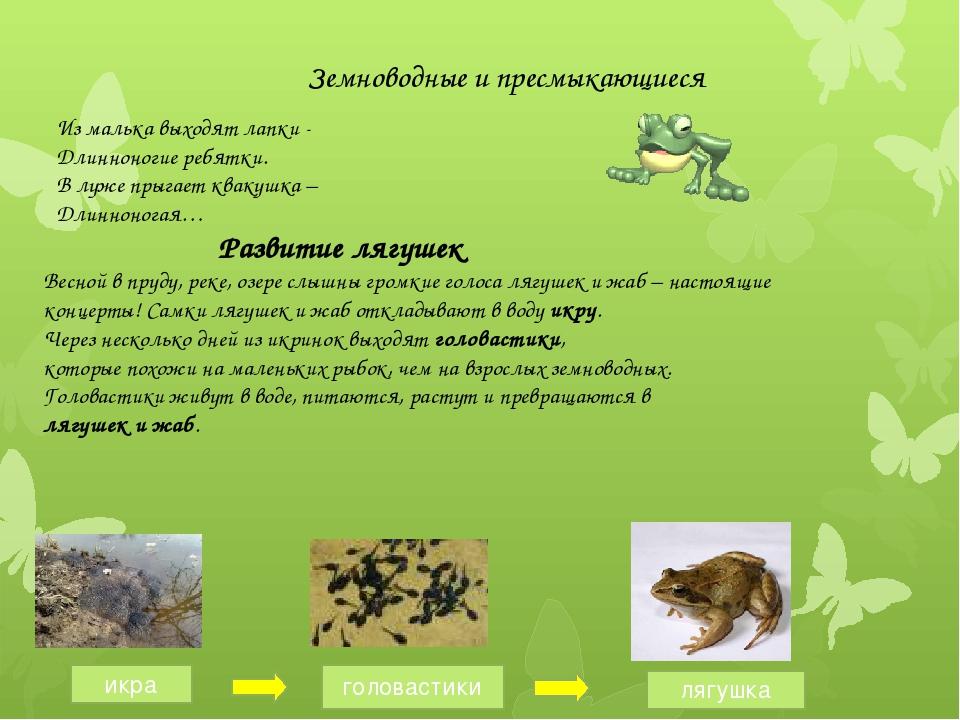 Земноводные и пресмыкающиеся Развитие лягушек Весной в пруду, реке, озере сл...