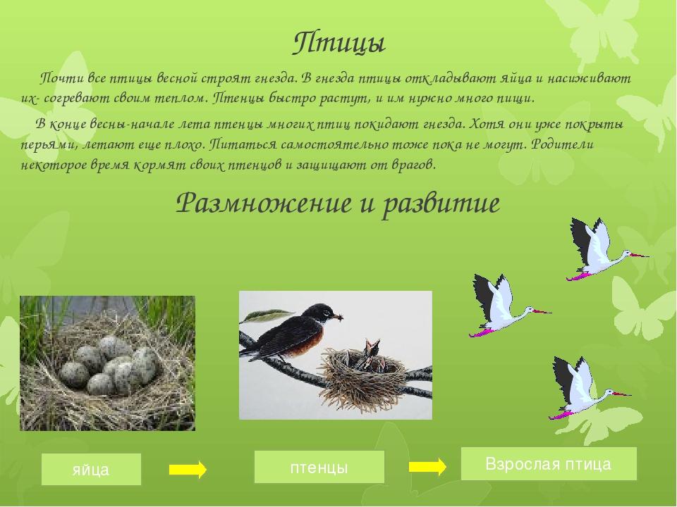 Птицы Почти все птицы весной строят гнезда. В гнезда птицы откладывают яйца и...
