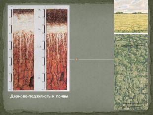 Дерново-подзолистые почвы