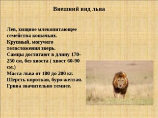 Внешний вид льва Лев, хищное млекопитающее семейства кошачьих. Крупный, могуч