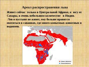 Ареал распространения льва Живет сейчас только в Центральной Африке, к югу от