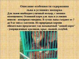 Описание особенности содержания льва в условиях зоопарка Для львов необходим