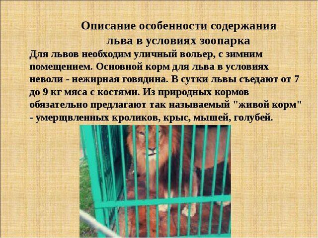 Описание особенности содержания льва в условиях зоопарка Для львов необходим...