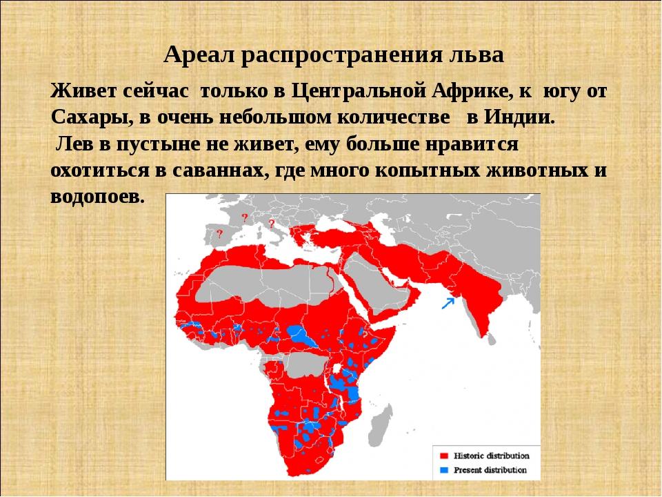 Ареал распространения льва Живет сейчас только в Центральной Африке, к югу от...