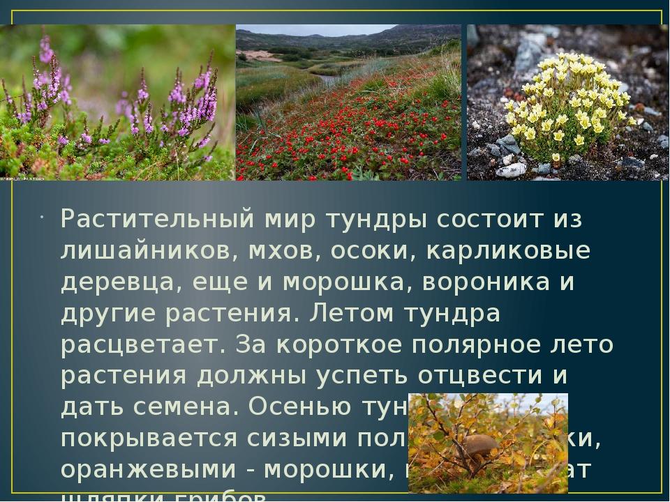 рисунке растения тундры фото и описание устроил пикник тени