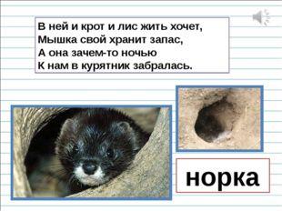 В ней и крот и лис жить хочет, Мышка свой хранит запас, А она зачем-то ночью