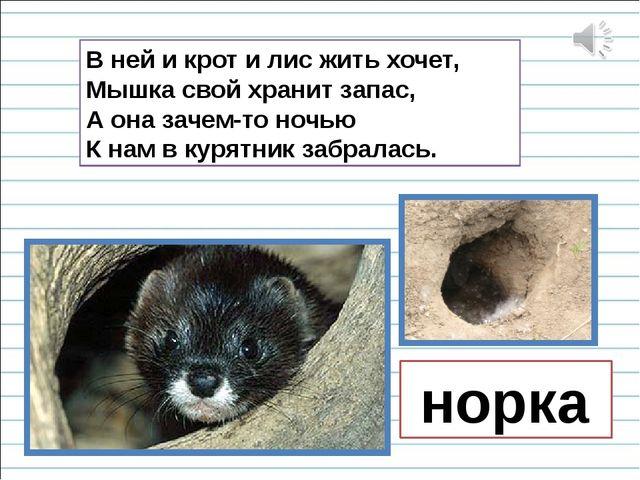 В ней и крот и лис жить хочет, Мышка свой хранит запас, А она зачем-то ночью...
