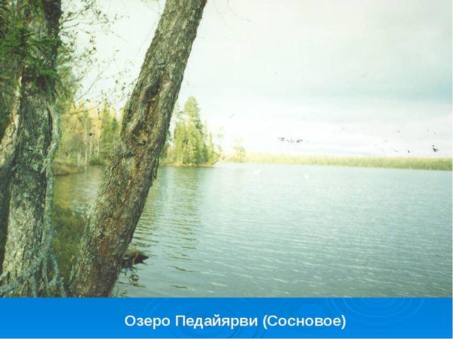 Озеро Педайярви (Сосновое)