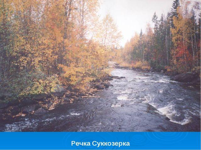 Речка Суккозерка