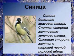 Синица довольно красивая птица. Спинная сторона желтовато-зеленого цвета, бр