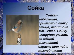 Сойка - небольшая, примерно с галку птица, весит она 150—200 г. Сойку нетруд
