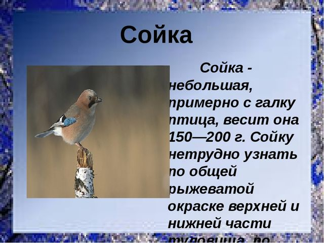 Сойка - небольшая, примерно с галку птица, весит она 150—200 г. Сойку нетруд...