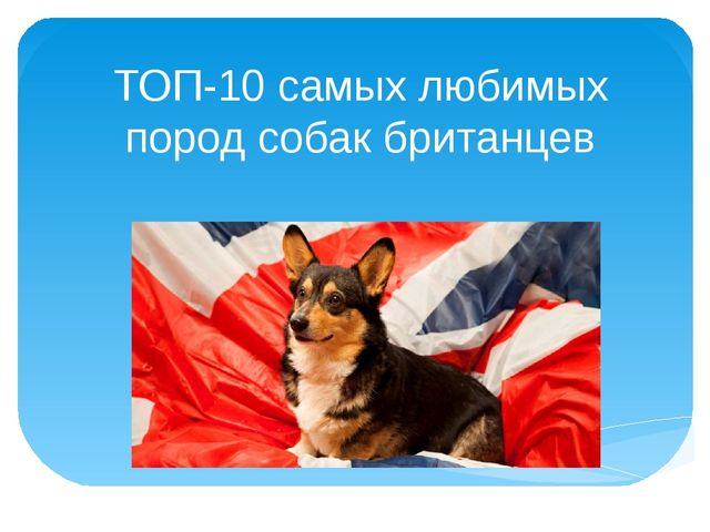 ТОП-10 самых любимых пород собак британцев