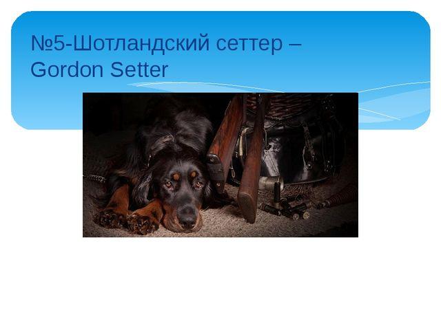 №5-Шотландский сеттер – Gordon Setter