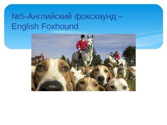 №5-Английский фоксхаунд – English Foxhound