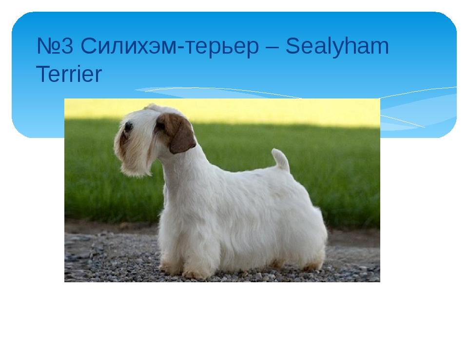№3 Силихэм-терьер – Sealyham Terrier