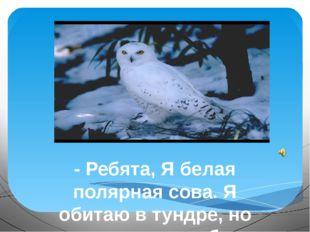 - Ребята, Я белая полярная сова. Я обитаю в тундре, но мне хотелось бы узнат