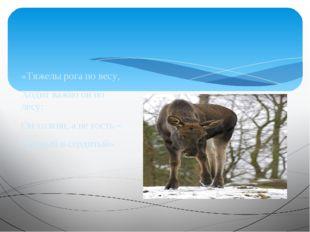 «Тяжелы рога по весу, Ходит важно он по лесу: Он хозяин, а не гость – Хмурый