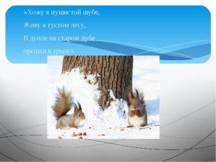 «Хожу в пушистой шубе, Живу в густом лесу, В дупле на старом дубе орешки я гр