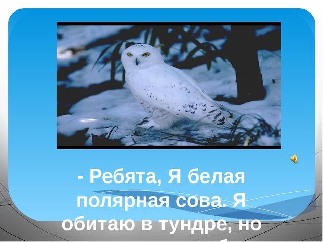 - Ребята, Я белая полярная сова. Я обитаю в тундре, но мне хотелось бы узнат...