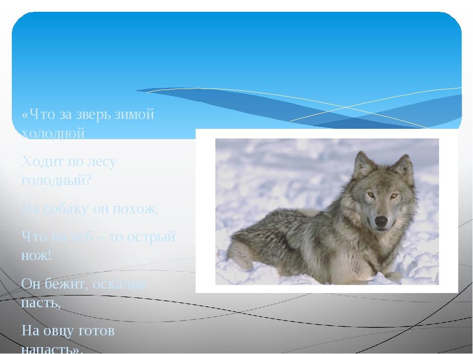 «Что за зверь зимой холодной Ходит по лесу голодный? На собаку он похож, Что...