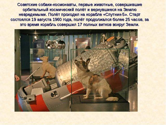 Советские собаки-космонавты, первые животные, совершившие орбитальный космиче...