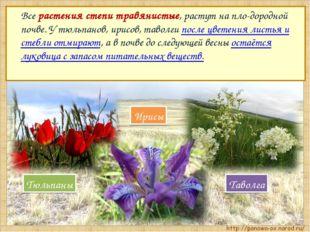 Все растения степи травянистые, растут на пло-дородной почве. У тюльпанов, и