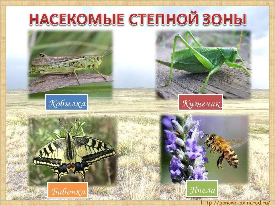 Кобылка Пчела Бабочка Кузнечик