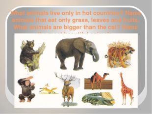 What animals live only in hot countries? Name animals that eat only grass, le